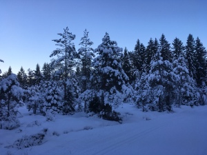 snow covered frugality