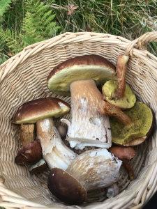 Mushroom hunting in the forest